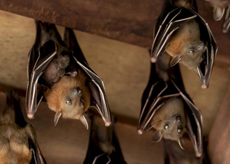 Morcegos voltam a aparecer na área central da cidade