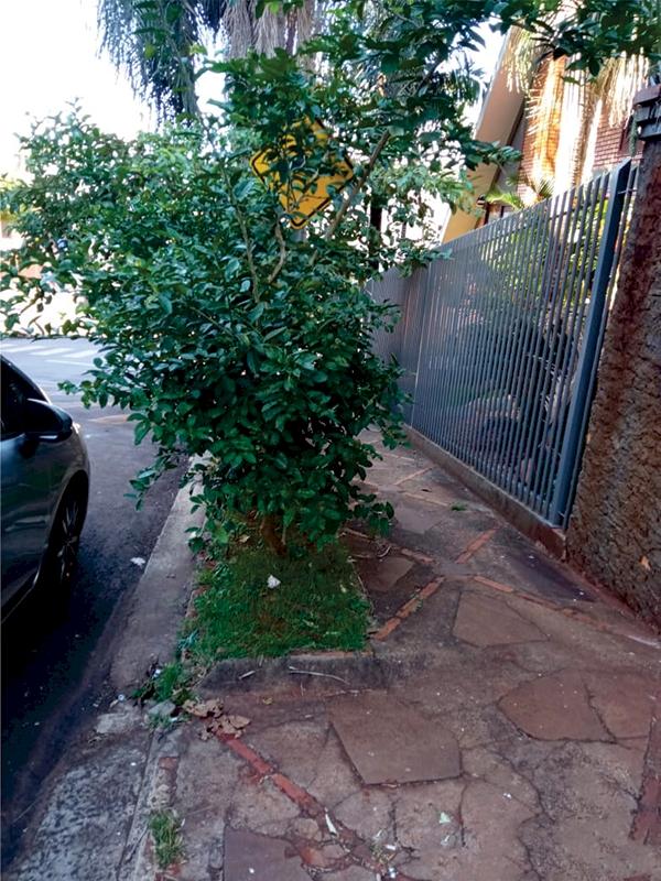 Plano de padronização de arborização urbana poderá ser implementado ainda este ano