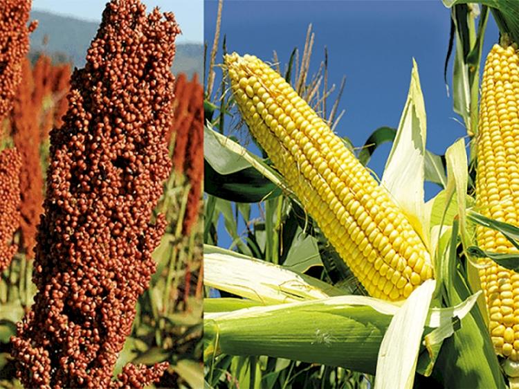 Anistia do Programa Troca-Troca beneficia mais de 350 agricultores