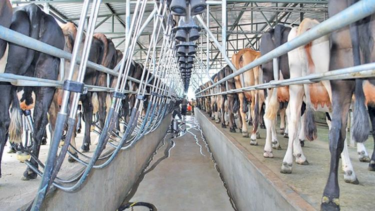 Diagnóstico da produção leiteira na Fronteira Noroeste do RS