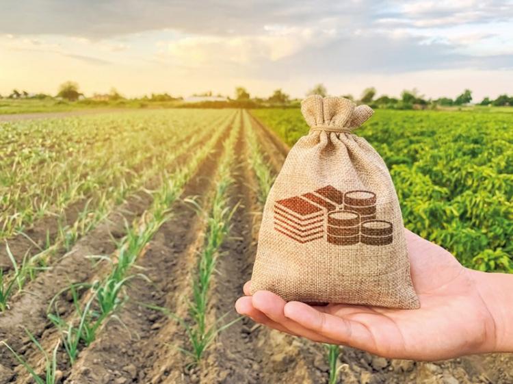 Produtores rurais precisam ficar atentos aos prazos do e-Social